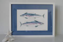 Stunning Mackerel Watercolour with fabulous blue mount image